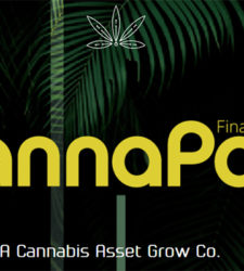 Branding will decide cannabinoid market winners, losers