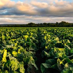 Taylor Farms, Plug and Play Furthering Food Industry Innovation