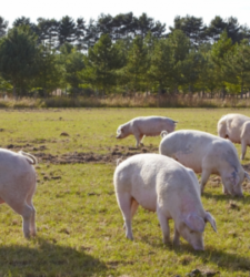 Why the UK Food Industry Can't Risk Anything Less Than 'Radical Transparency'
