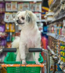 Recycling Guide: Pet Food Packaging
