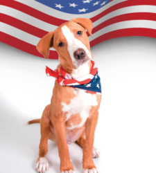 "Pet product labels frequently featuring ""Made in USA"""