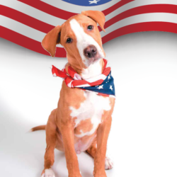 """Pet product labels frequently featuring """"Made in USA"""""""