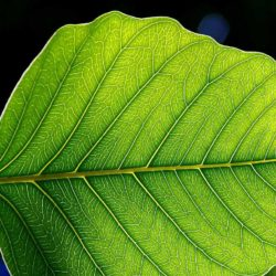 International Update: The 10 green chemicals that could change UK industry