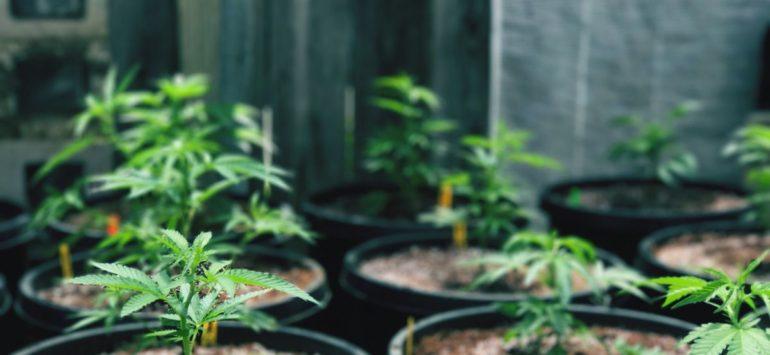 FDA Approves Marijuana-Based CBD Drug for Epilepsy