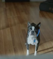 CampaignLive: Study suggests Harrison Ford's dog was funniest Super Bowl ad